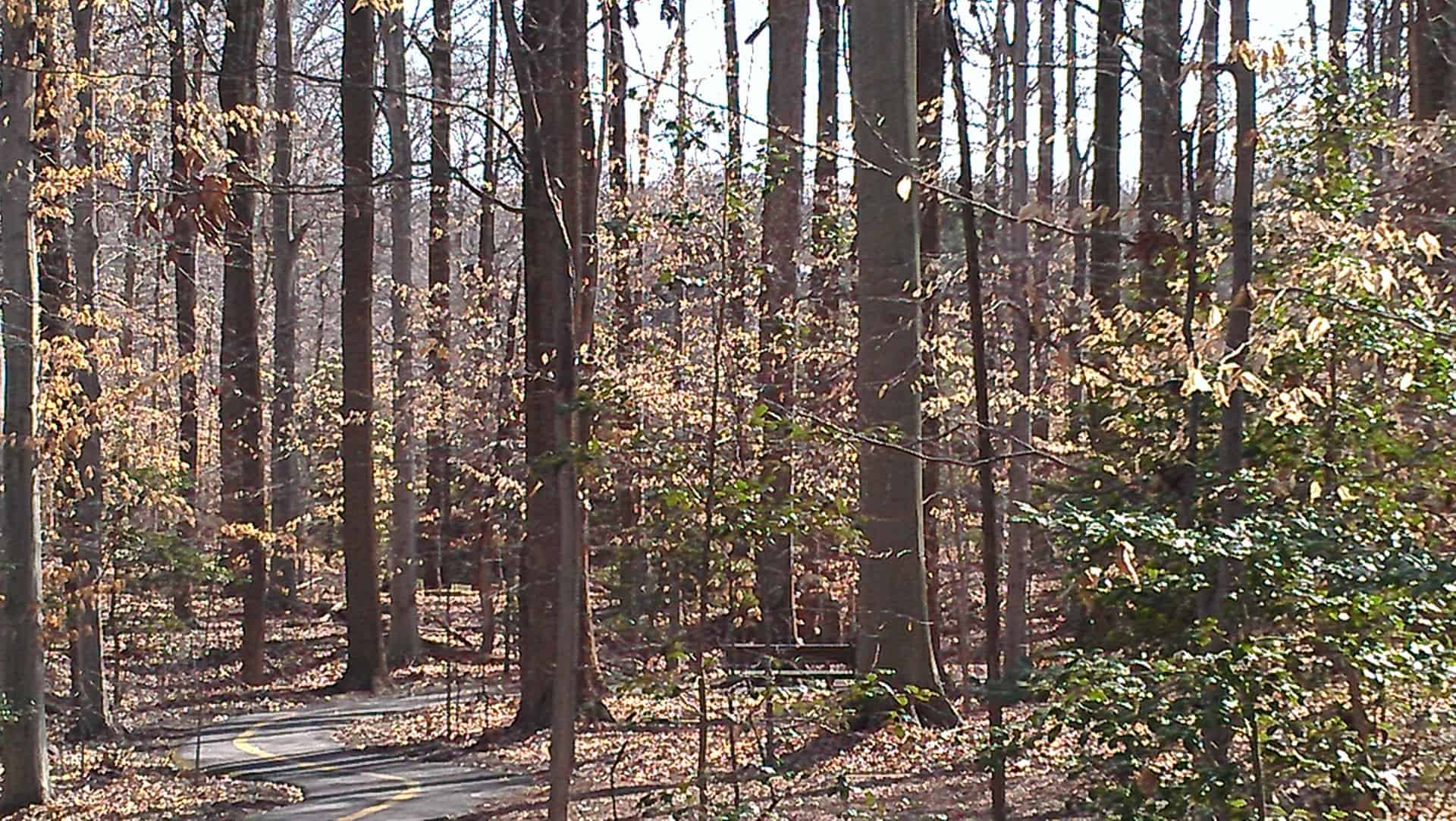The hardwood forest, Maryland. Who loves hardwoods?