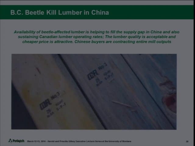 beetle china