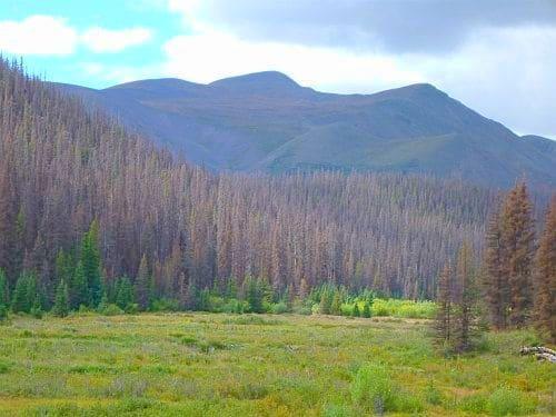 Cochetopa area, spruce beetle infestation, August 2013. Photo courtesy of GMUG NF.