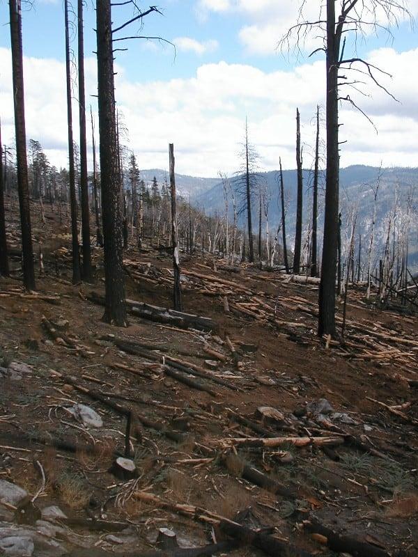 Cole-creek-hi-burn-done-web