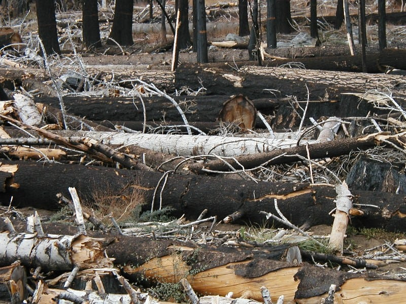 Cole-creek-logs-web