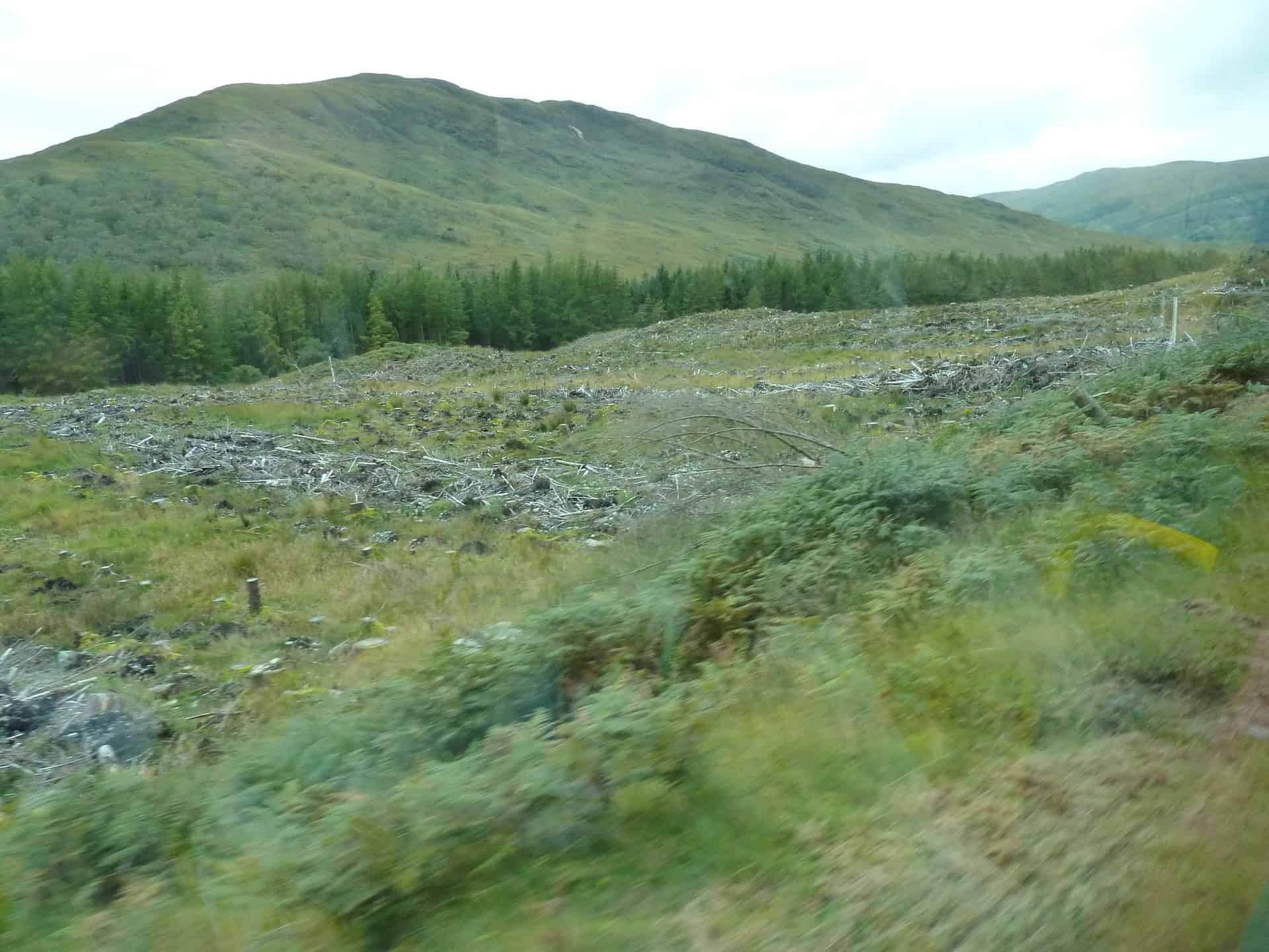 clearcut along road (see reflection in bus window)