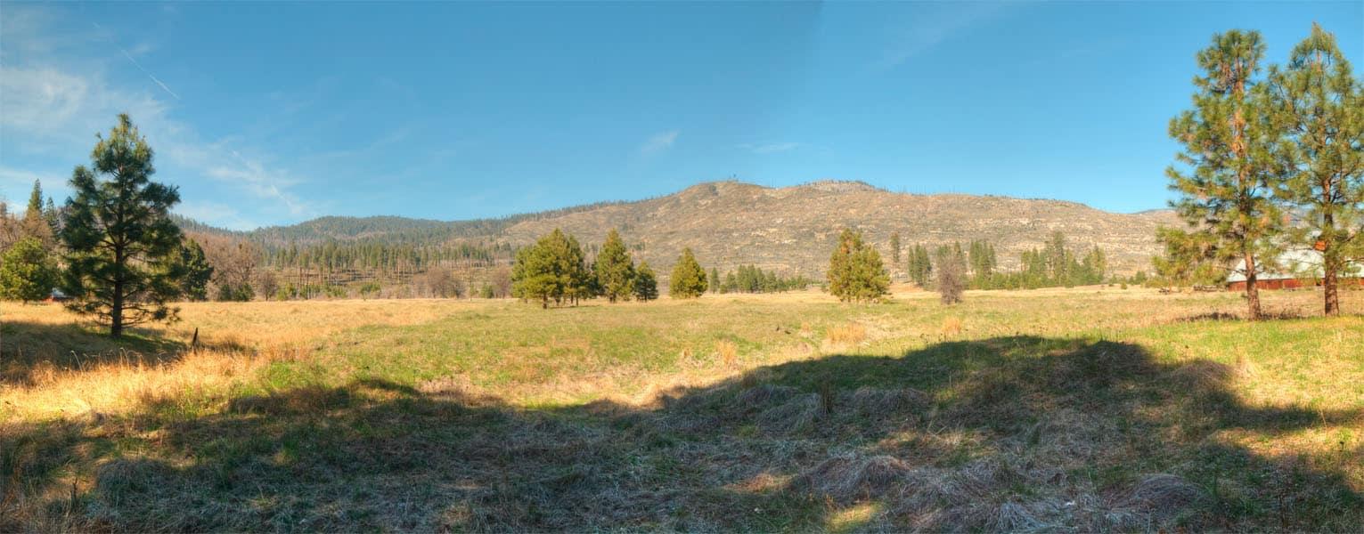 Foresta-panorama-crop-web