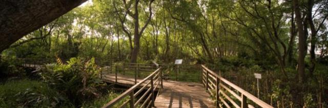 jakarta-nature-reserve