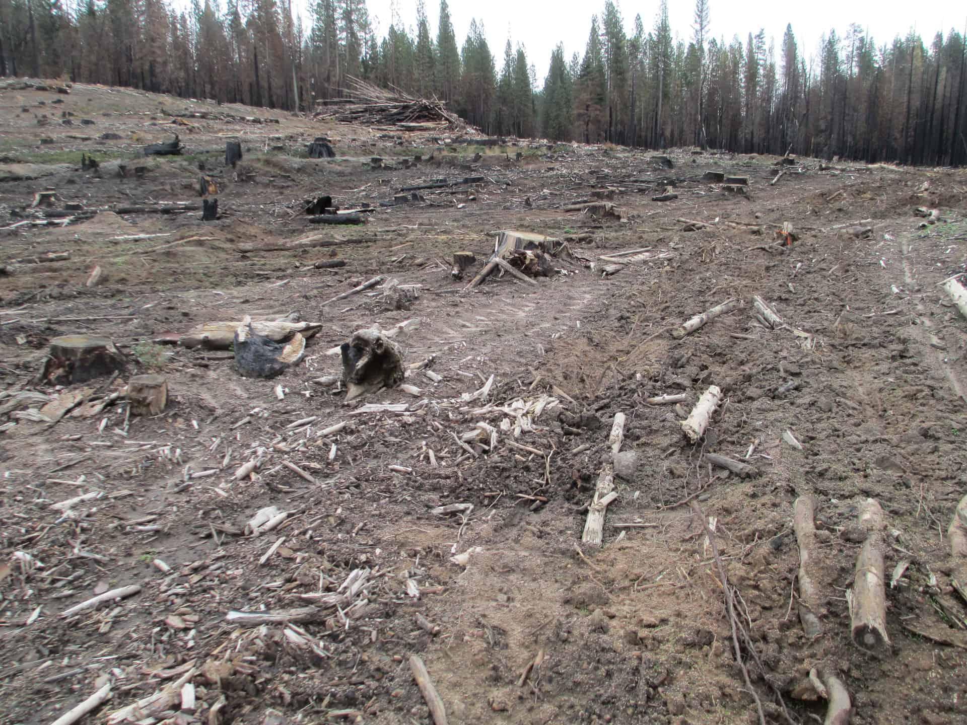 Rim Fire Area Logging