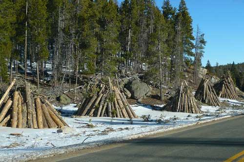 Rocky Mountain National Park roadside hazard tree burnpiles